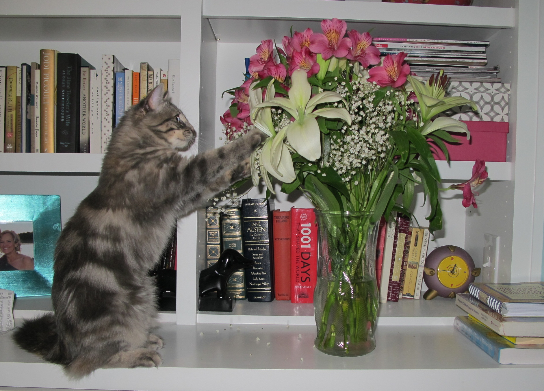 Image result for lilies and cats